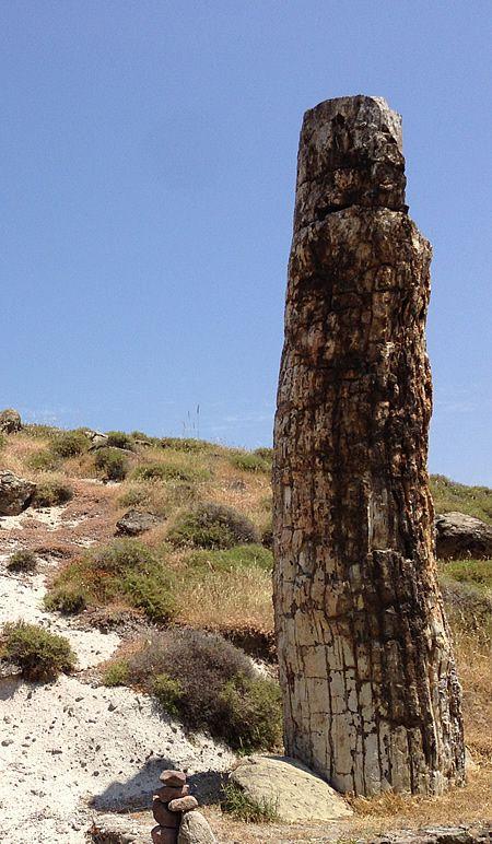 Tree in the petrified forest at Lesbos, Greece via http://www.last-minute-autovermietung.de/en/destination-pics.html