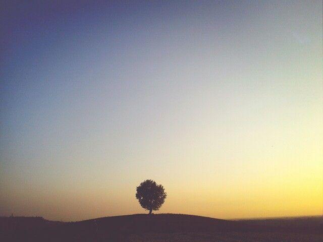 L'albero sulla collina