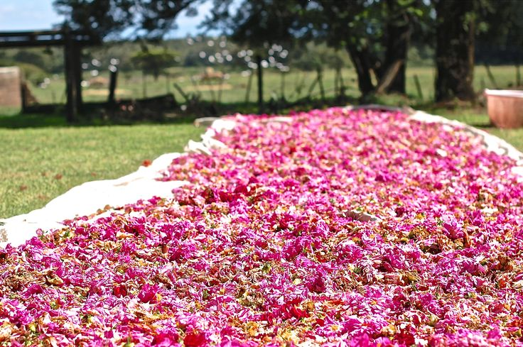 Kenana farm - blossoms