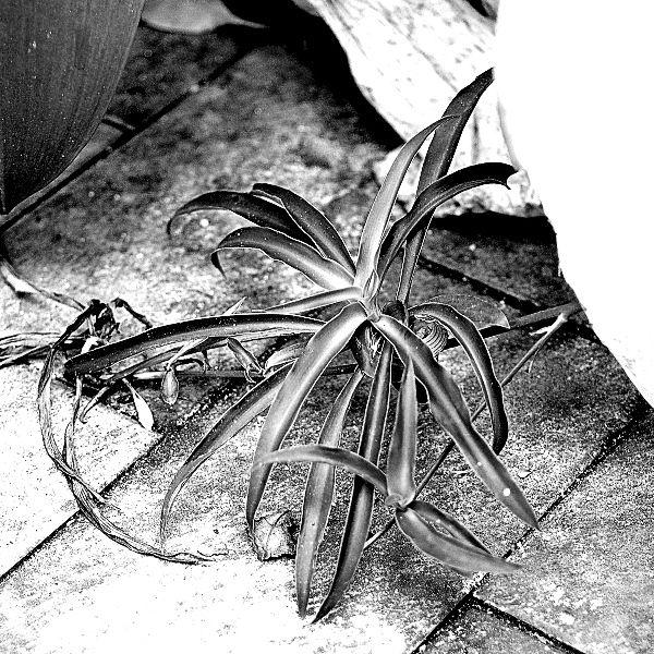 Nikkor 35mm f/2.8 Pre-Ai: Digital Moments 02