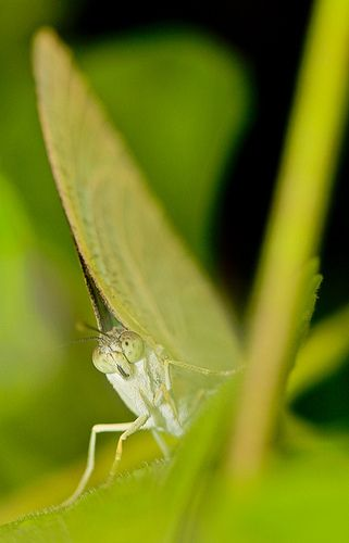 September 05, 2013 - Bug 002 Small