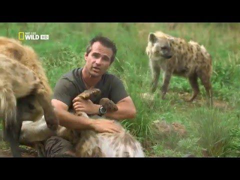 Кевин Ричардсон: человек, обнимающийся с дикими львами