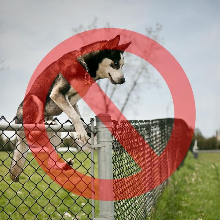 Houdiniproof dog proofer fence extension system kit in