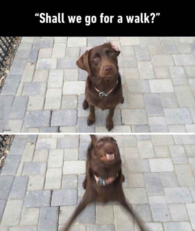 #dog #dogs #doglovers #cute #animals