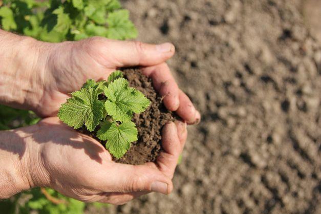 FN oppfordrer verdens nasjoner til å satse på nasjonal bærekraftig matproduksjon og ikke basere seg på import for å få bukt med miljøproblemer og økte matbehov.