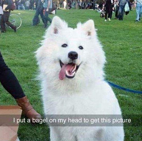 Shit happens sometimes – 30 Funny pics