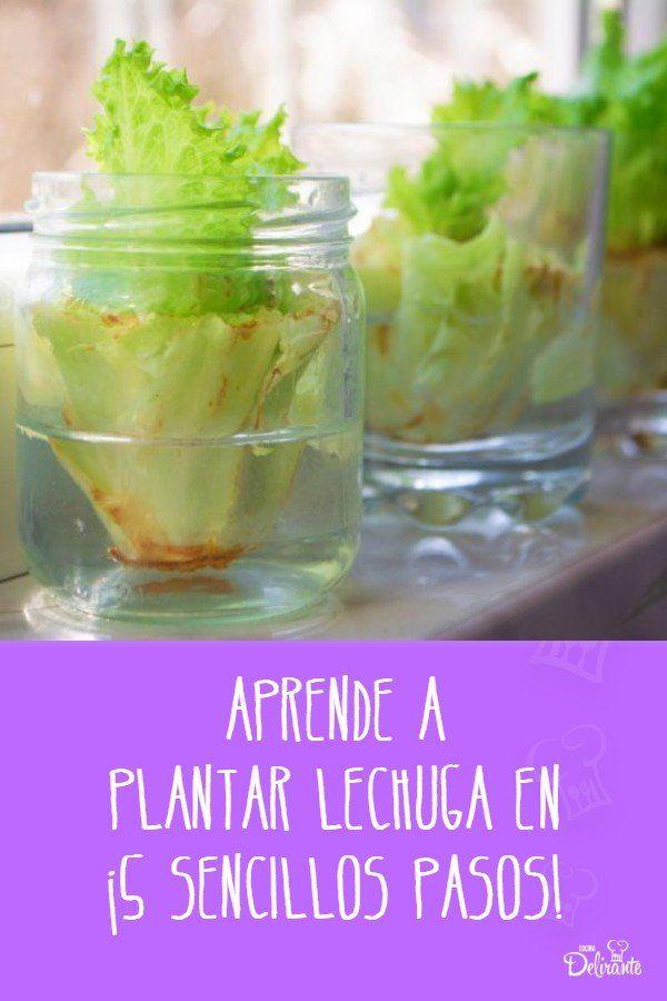 como puedo plantar lechuga Growing Vegetables, Guacamole, Garden Landscaping, Mexican, Cooking, Ethnic Recipes, Plants, Food, Gardens