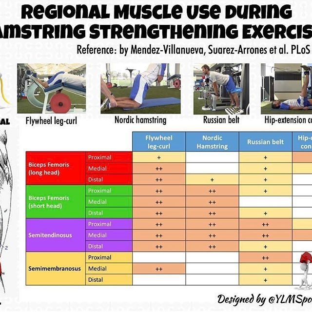 #Repost @ylmsportscience with @repostapp ・・・ #Prevention ⚽️ Regional Muscle Use during Hamstring Strengthening Exercises #sport #muscle #prevention #strength #soccer #sprint #rugby #football #sportscience #sportsmedicine #infographic #physiosport #physiosoccer #sportsphysiocampinas #sportsphysio #sportsprevention #sportsmedicine #fisioterapia #fisiofutebol #fisioesportiva #fisiodesportiva #fisioesportivabrasil #fisiobrasil #instafisio #hanstrings #hanstringsprevention