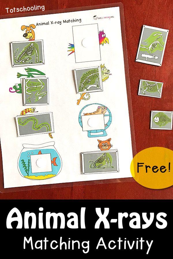 la actividad de los rayos X juego Animal GRATIS con 8 animales diferentes en el veterinario.  la actividad de la guardería Gran preescolar o para aprender acerca de los rayos X, la letra x, animales domésticos, ayudantes de la comunidad, o una oficina del veterinario pretenden actividad de juego.