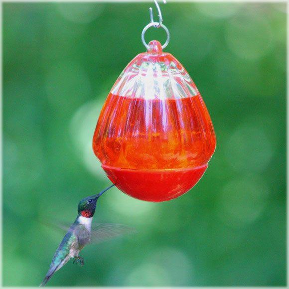 Great Mini Hummingbird Feeder....I Donu0027t Put Red Food Coloring In