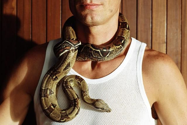 Red-Tailed Boa Constrictor Snakes as Pets