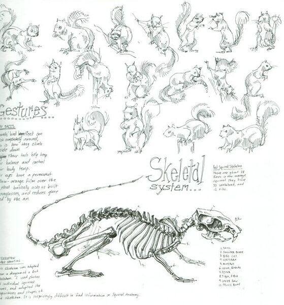 28 best animal anatomy images on pinterest