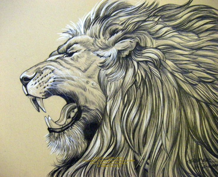 Pencil Drawings Of Jesus | Lion Roar by HouseofChabrier | Shadowness