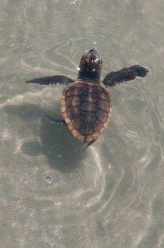 Witness sea turtles hatching is one of the most amazing things I've seen!