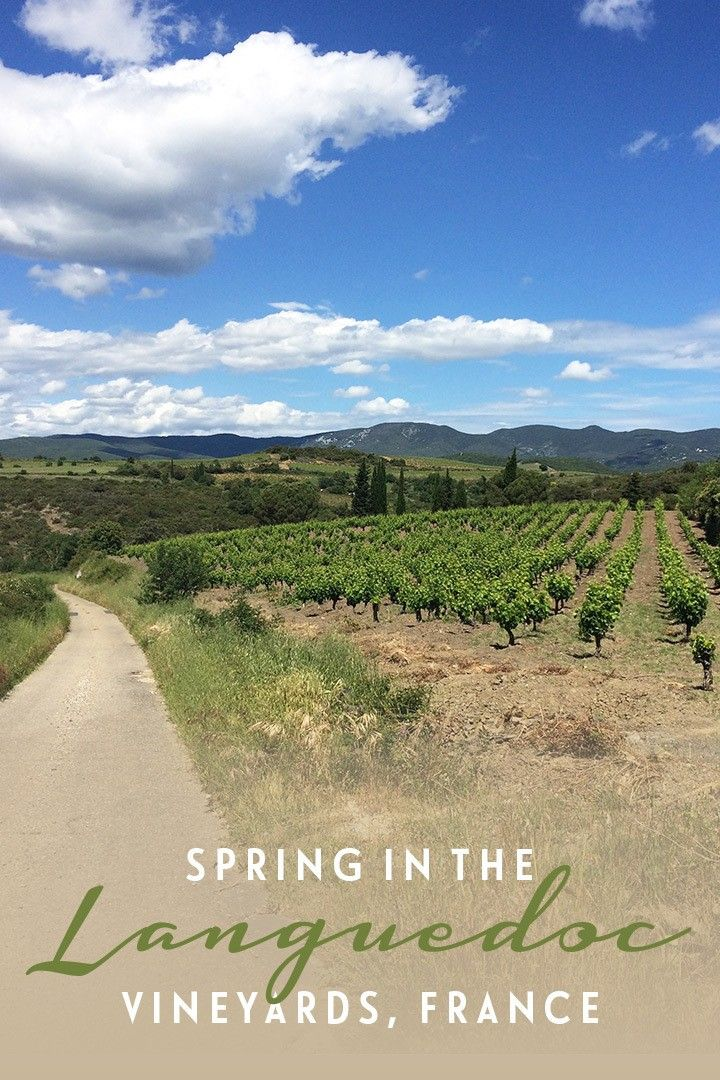 Spring in the Languedoc vineyards, France