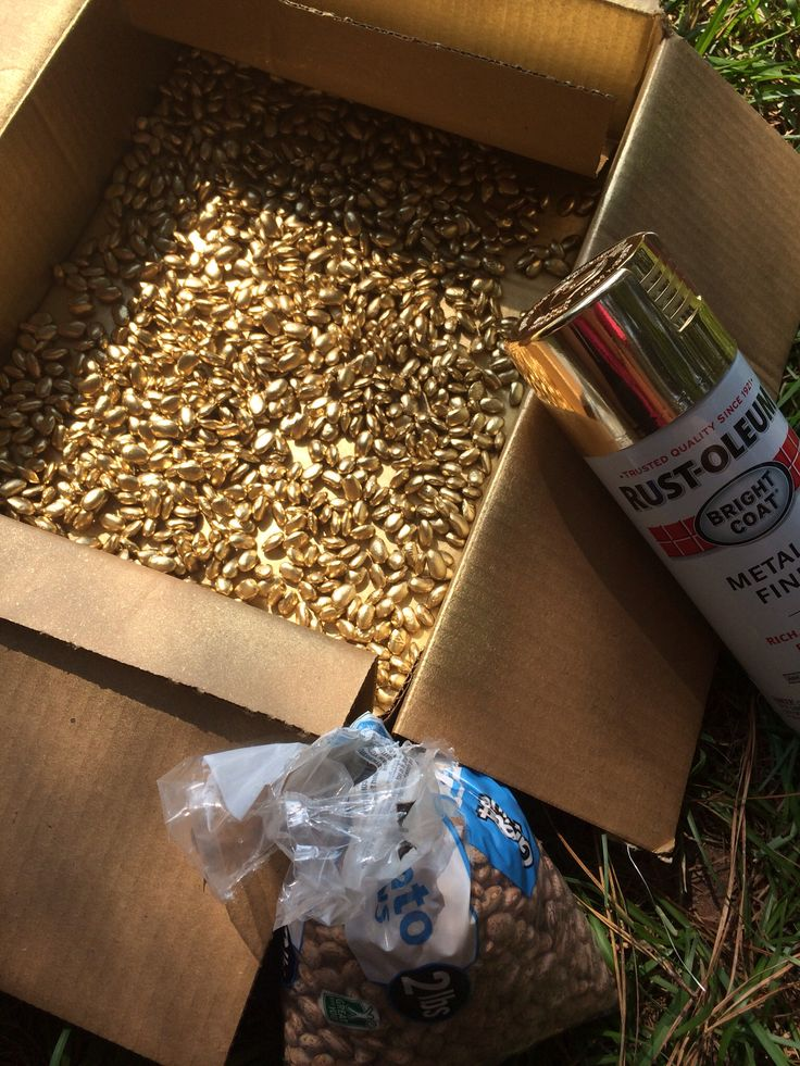 Spray Pinto Beans With Gold Spray Paint. Cheap Vase Filler, Fill, Diy,