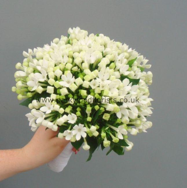 white bouvardia flowers - Google Search