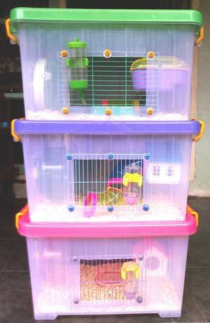 DIY Hamster Cages from storage boxes.                                                                                                                                                     More
