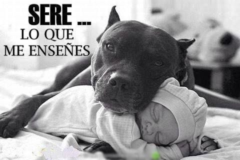 No hay razas de perros agresivas, sino dueños peligrosos