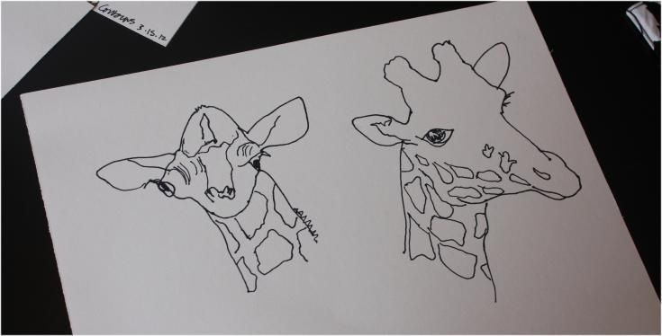 Blind Contour Line Drawing Lesson Plan : Best images about contour drawings on pinterest