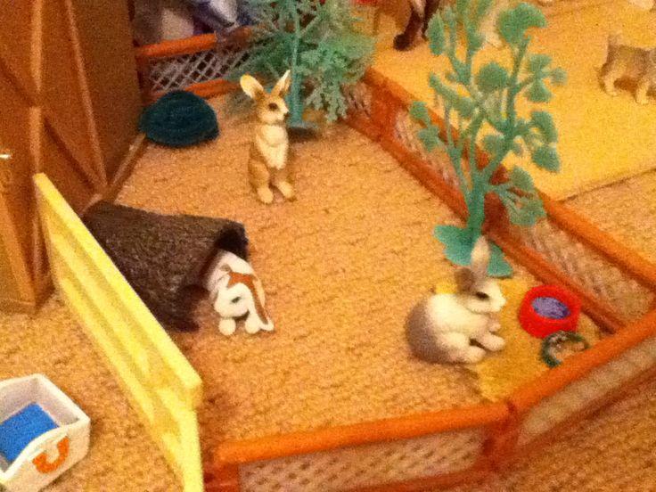 The rabbits Halo, Hopscotch and Benny