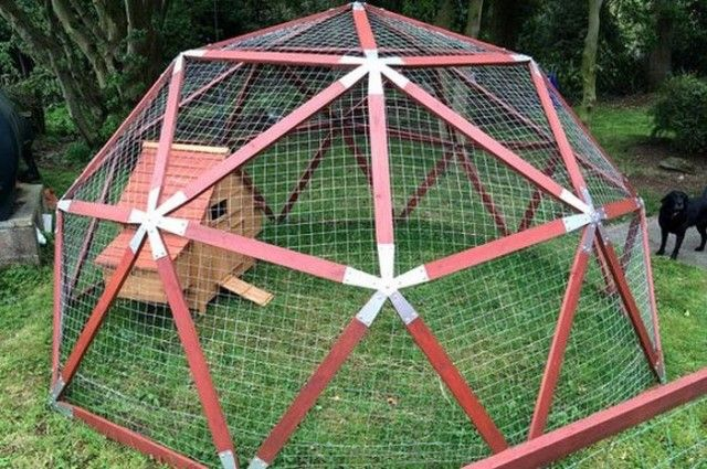 How to build a geodesic chicken dome                                                                                                                                                     More