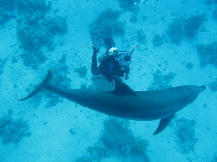 Egipt reefs dolphin diving