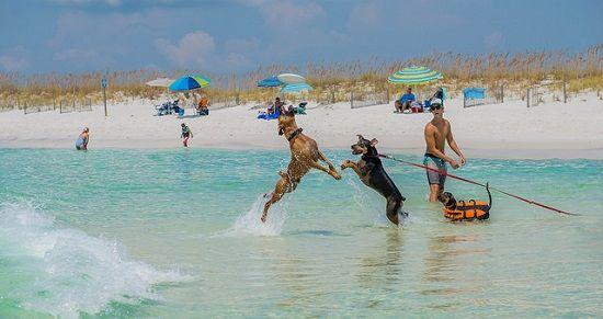 Les plages autorisées aux chiens en 2015