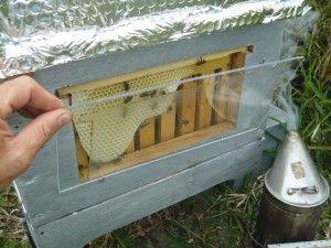 """99% des ruches calédoniennes sont des """"Langstroth"""". L'""""hiver"""" n'est pas assez rude pour devoir recourir au gros volume du corps de ruche de la Dadant, beaucoup plus répandue en France. Et la hausse du même format que le corps de ruche facilite le renouvellement..."""