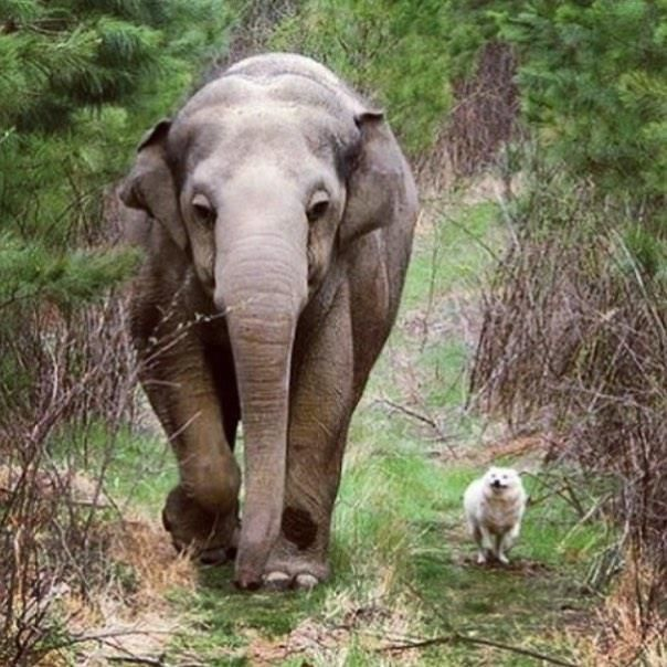 741 vind-ik-leuks, 12 reacties - Daily Elephants (@daily.elephant) op Instagram: '@scarlett25'