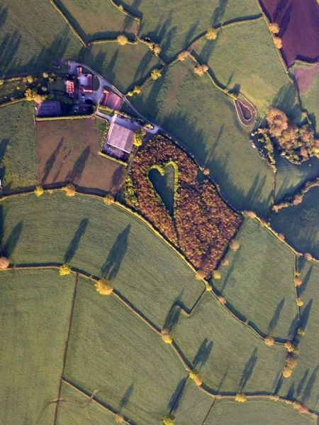 Winston Howes, a British farmer, spent years creating this touching heart-shaped meadow as a tribute to his late wife.: Farmers, Late Wife, Heart Shape, In Memories Of, Memories 11/9, Weightloss, Oak Trees, Weights Loss, Fields
