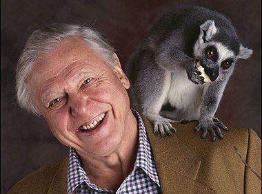 David Attenborough - david-attenborough Photo