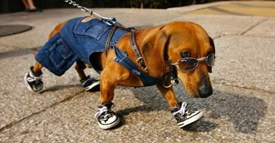 Como fazer roupa para cachorros - O primeiro passo para fazer uma roupinha para o seu cachorro é tirar suas medidas!