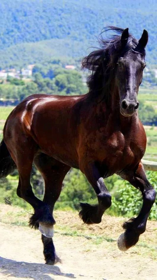 Pretty galloping, running horse.