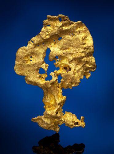 °Unusual Arbormorphic Gold Nugget ~ Kalgoorlie, Australia