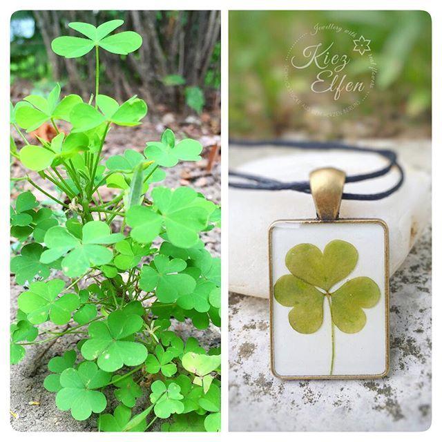 ☘ #kette mit #herzklee ☘ #glücksbringer #glück #verschenken #lucky #clover #cloverleaf #green #herz #klee #kleeblatt #grün #Unikat #unique #blatt #leaf #nature #beautiful #picoftheday #schmuckstück #necklace #jewelry #jewellery #handmade #resinart