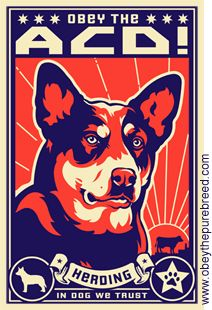 Obey The Australian Cattle Dog!  Propaganda for the ACD Revolution