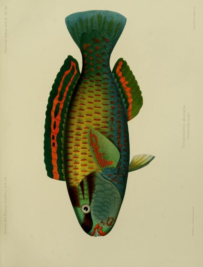 Journal des Museum Godeffroy, 1909/10