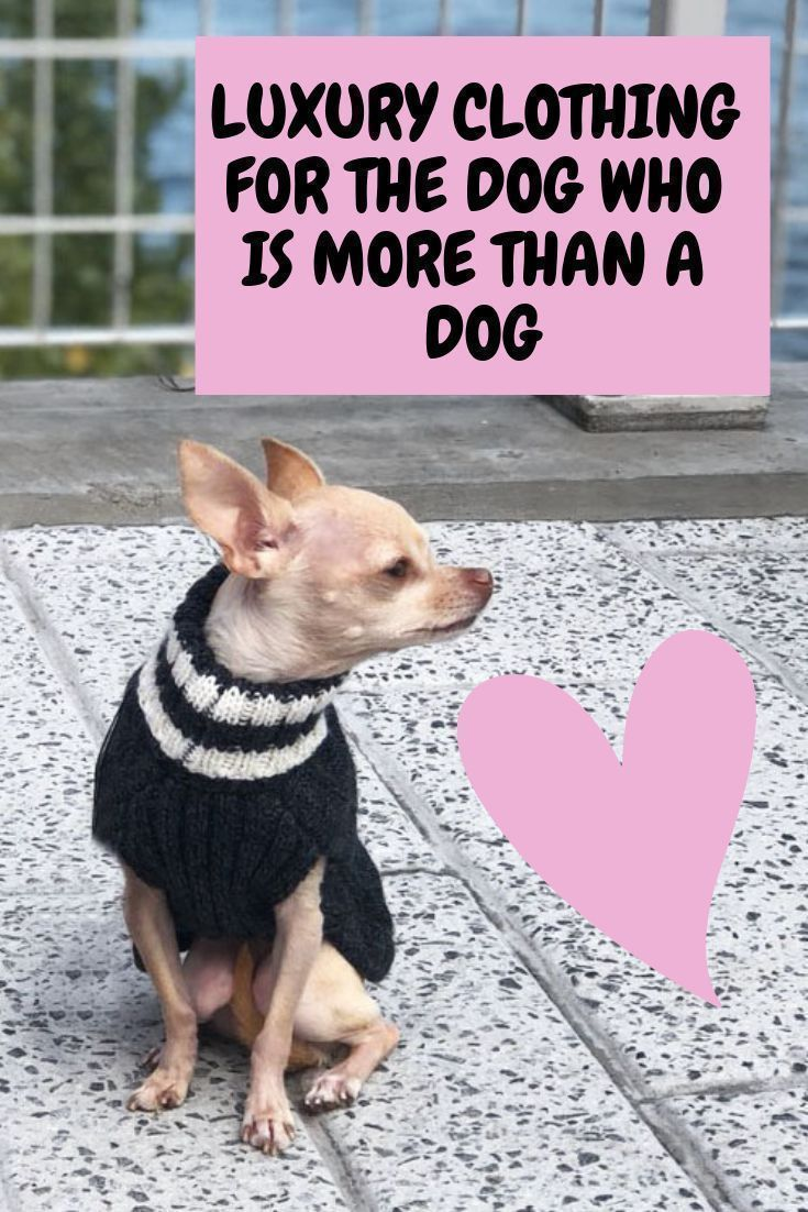 Luxury Dog Clothing For The Spoiled Dog Chihuahua Clothes Dog