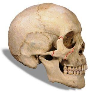 322 best cranio images on pinterest, Human Body