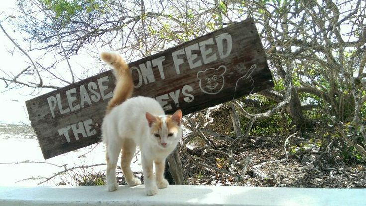 Please don't feed the monkeys.  Jambiani, Zanzibar.  Shot by Fresko.