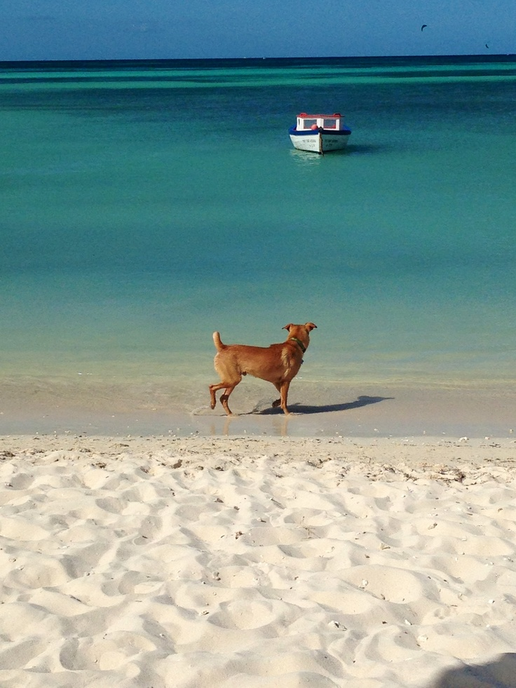 traveling aruba with pets