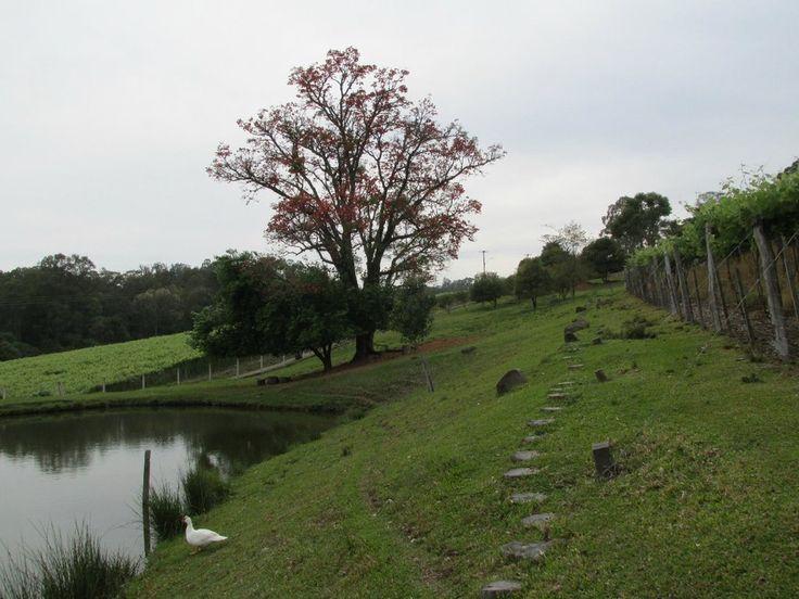 Afeto Pousada e Parador (Bento Goncalves, Brasil) - Pensión - Opiniones y comentarios - TripAdvisor