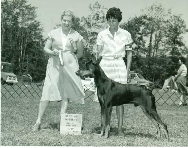 Doberman Pinscher facts including: history, training/temperament, and breed colors and markings.