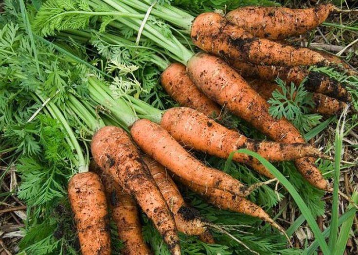 Les 88 meilleures images propos de jardin potager sur for Marre de jardin