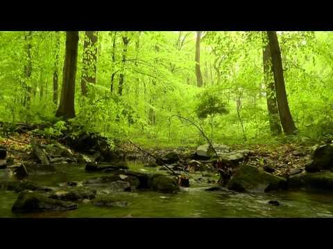Sounds of Nature: 60 relaxing minutes of Woodlands, Trickling Stream, Babbling Brooks, Bird Sounds