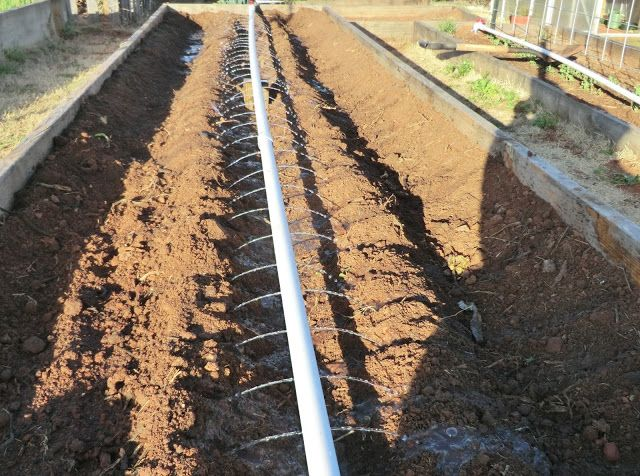 Garden Irrigation Ideas drip tubing in vegetable garden Junk The Water Hose For A Simple 35 Diy Rainwater Irrigation System