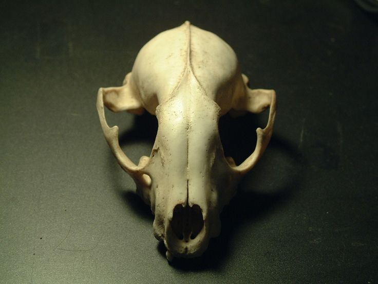 Animal Skulls Animal Skull 1 By Mrbobafett On DeviantART