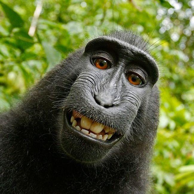 """""""The fundamental cause of the trouble is that in the modern world the stupid are cocksure while the intelligent are full of doubt."""" """"Die fundamentale Ursache der Probleme ist, dass in der modernen Welt die Dummen todsicher, die Intelligenten hingegen voller Zweifel sind."""" (Bertrand Russell)  Man vermutet, dass """"cock"""" im Mittelalter ein Wort für """"Gott"""" war. """"cocksure"""" bedeutet demnach: Sich so sicher sein, als sei man Gott. Mehr Twilingo unter https://soundcloud.com/twilingo #englisch…"""