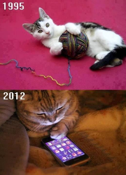 #evolution of #technology! #cat #iphone #funny